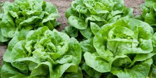saladas_seguras